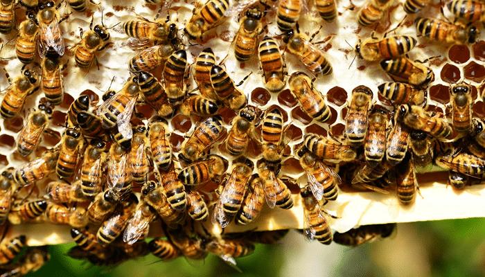 Dartford BeeKeepers