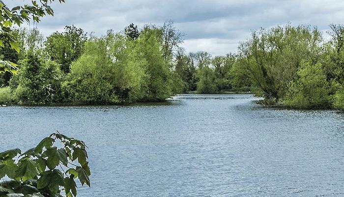 Blue-Green Algae in Brooklands Lakes – Dartford Borough Council