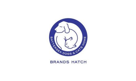Meet the BFC – Battersea Brands Hatch take in giant cat