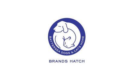 Meet the BFC – Battersea Brands Hatch take in giant cat