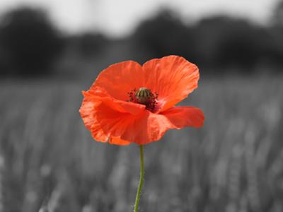 poppy-appeal