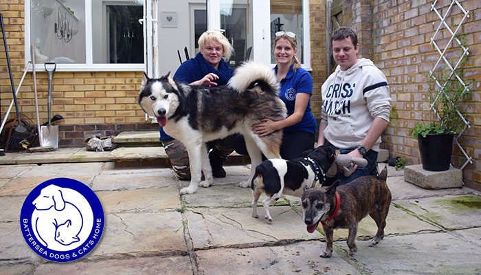 Battersea Brands Hatch longest resident Theo finally finds his match