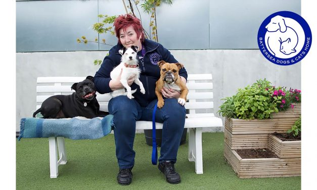 Battersea's Ali Taylor Offers Her Top Tips For Dogs And Cats On Bonfire Night