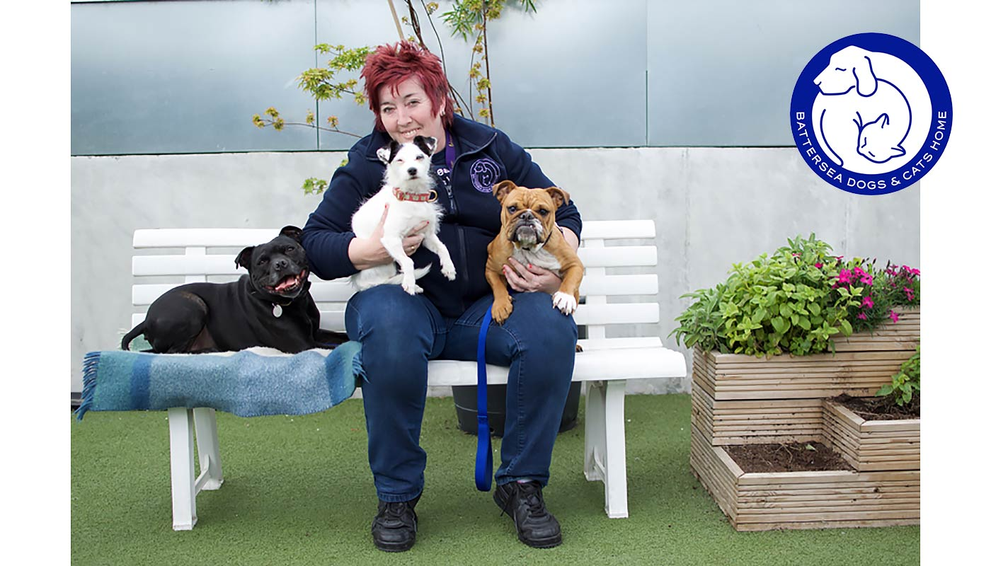 Battersea's Ali Taylor with Squirt, Bella and Enid