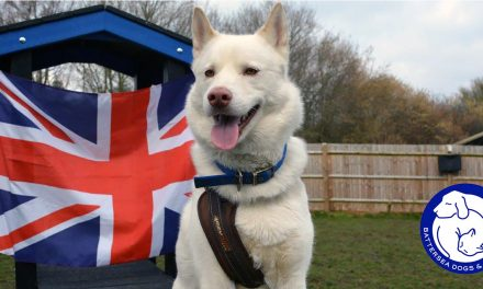 Battersea's Very Own Winter Hoping to Win Olympic Gold