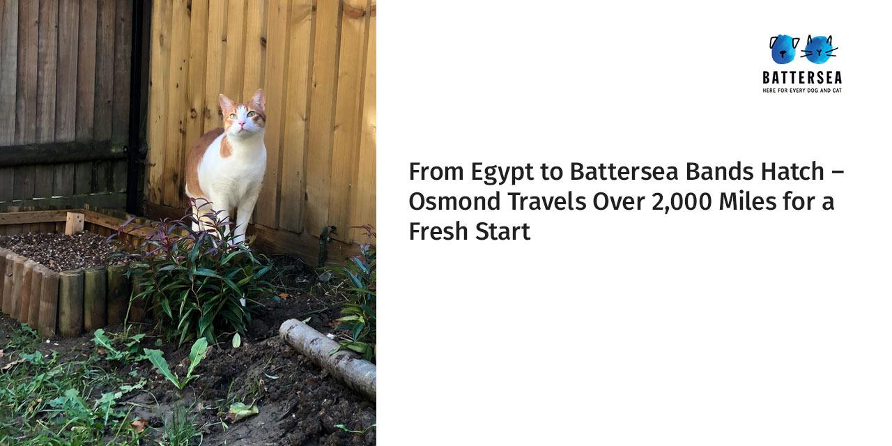 Osmond Travels Over 2,000 Miles for a Fresh Start